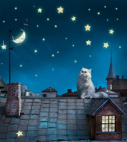 Night life Cats Premium wall mural